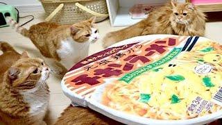 チキンラーメンに入りたいマンチカンの猫家族たち Noodle sofa for cats