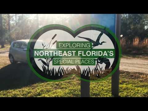Exploring Northeast Florida's Julington Durbin Creek Preserve
