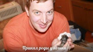 Принимаю роды у кошки :)