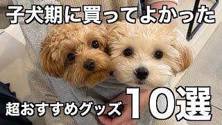 子犬期に買ってよかったおすすめ犬グッズ10選!【マルプー/チワプー】 screenshot 2