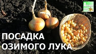 ВСЁ о посадке ОЗИМОГО ЛУКА / All about planting winter onions(, 2016-10-14T14:45:52.000Z)