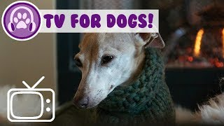 How to Calm My Dog at Home! TV and Music for Anxious Dogs!