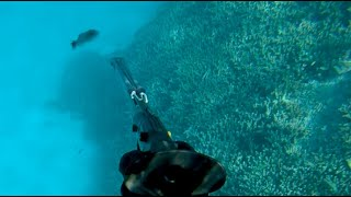 Spearfishing the Outer Reef - New Speargun EP.495