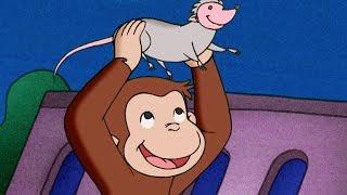 George O Curioso 🐵Criaturas Noturnas 🐵 O Macaco 🐵Episódio Completo 🐵 Desenhos Animados
