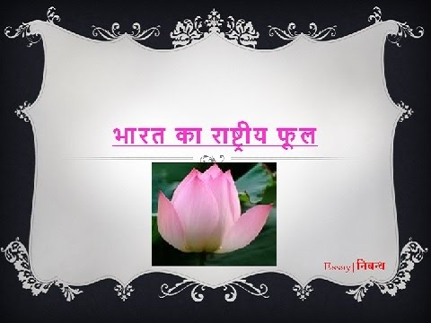 Hindi Essay On National Flower Of India