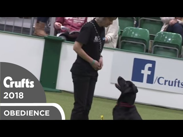 Inter-Regional Rally - Level 4 - Part 5 | Crufts 2018