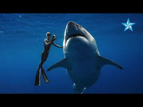 Catfish - Woman Diver Swims With 20 Foot Great White Shark!