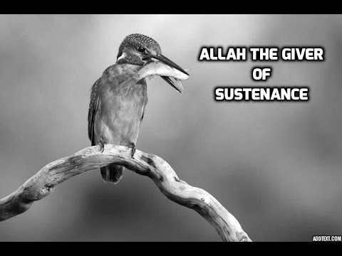 Sheikh Mohammad  - Amazing Hadith on sustenance