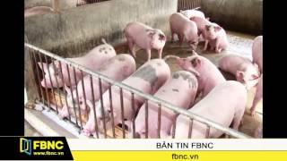 FBNC – Vì sao sử dụng chất cấm trong chăn nuôi vẫn tràn lan?