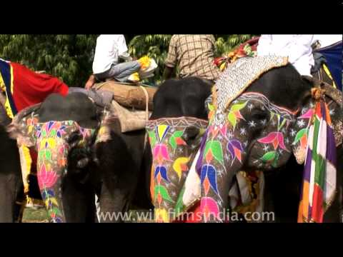 shy-giants-all-dressed-up-at-the-jaipur-elephant-festival
