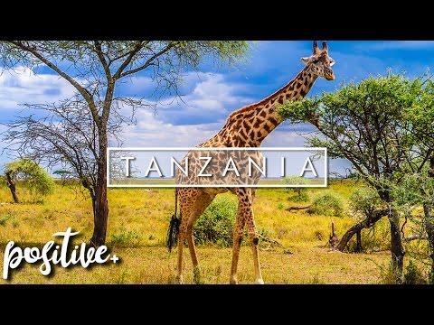 MY VISIT TO TANZANIA (Serengeti & Zanzibar) | Dave Cad