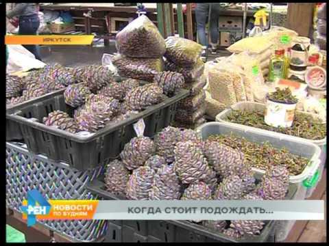 Кедровый орех уже продают в Иркутске, хотя собирать шишки ещё нельзя