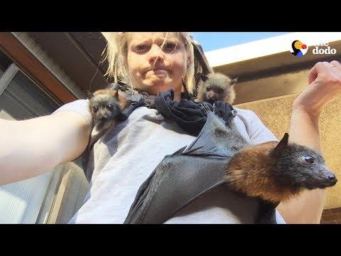 LIVE: Rescue Bats From Australia for National Bat Appreciation Day | The Dodo LIVE
