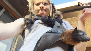 LIVE: Rescue Bats From Australia for National Bat Appreciation Day | The Dodo LIVE thumbnail
