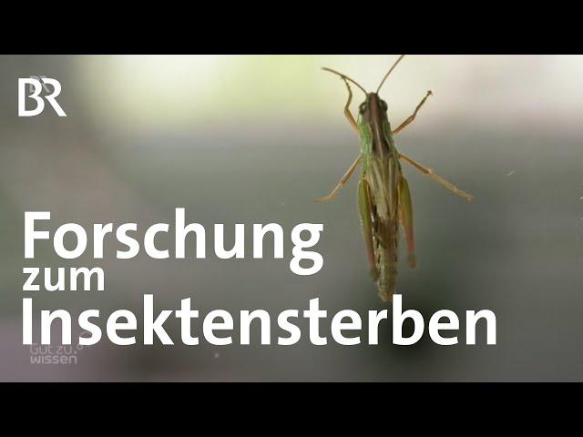 Forschung im Ecotron: Welche Folgen hat das Insektensterben für unser Ökosystem | Gut zu wissen | BR