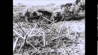 Α΄παγκόσμιος πόλεμος :Η ζωή των στρατιωτών στο μέτωπο