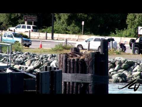 Washington State Travel  - 3 to the coast  - YouTube