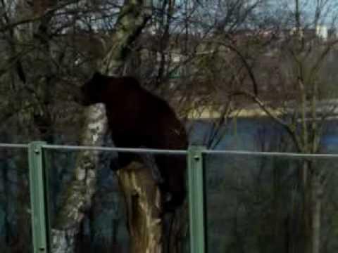Bear Stockholm zoo