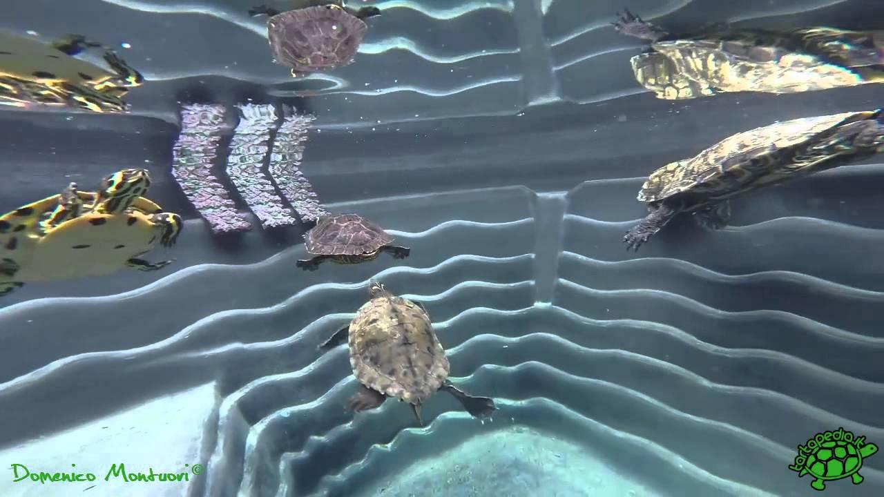 Go pro laghetto delle tartarughe youtube for Laghetto tartarughe esterno