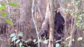 I think i saw a skunk ape - please help