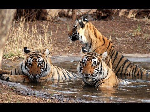 Devaliya Park -1, Sasan Gir, Junagadh, ( Gir Forest National Park )