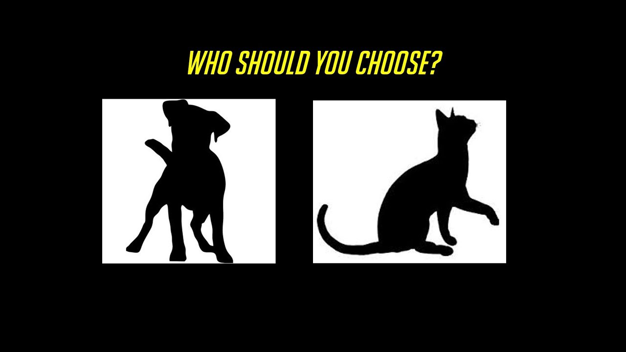 Cat Vs Dog Support Class