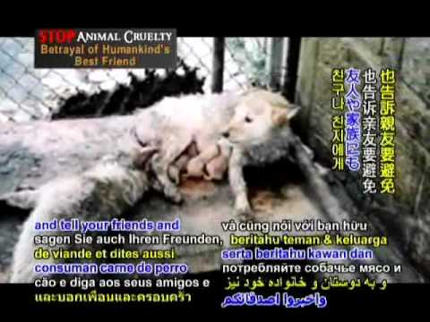 Animals Asia - Stop Animal Cruelty: Betrayal of Human's Best Friend - Part II