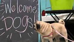 New Seattle Food Truck Caters to Canines