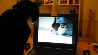 "My Cat is online dating (or watching ""porn"")"