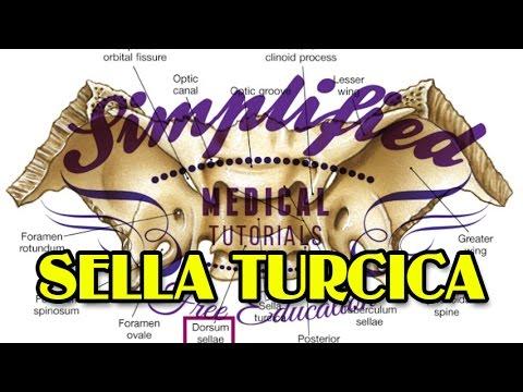 SELLA TURCICA Simplified - Anatomy - YouTube
