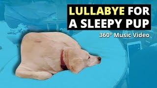 Lullabye for a sleepy pup on ukulele (360 Music Video)