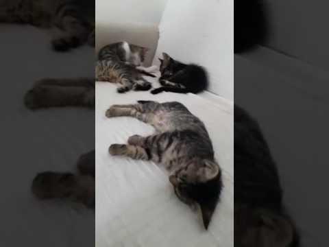 Sırtüstü Uyuyan Kedicik :)