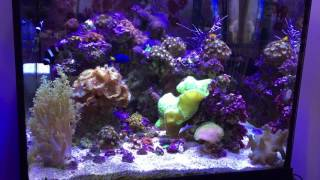 cj s aquariums 8k nano tank giveaway
