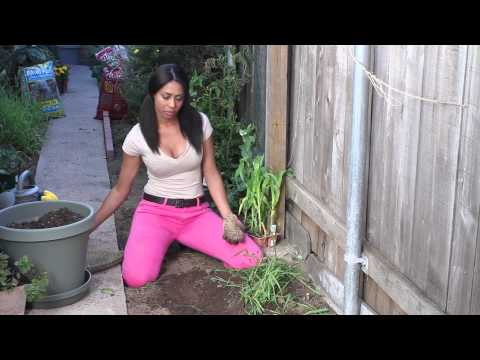 Weed Killer Instructions : The Chef's Garden