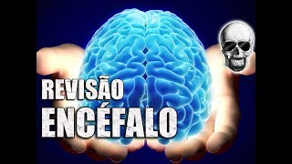 Encéfalo: Cérebro, Cerebelo e Tronco Encefálico   Revisão Rápida   Videoaula 164