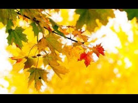 #901 VlOG  Самые яркие краски осени.....Цветы из моего сада..