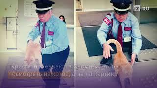 Два кота атаковали музей в Японии