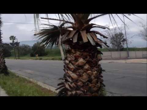 Vlog First Thoughts on San Bernardino, California; Yes, it