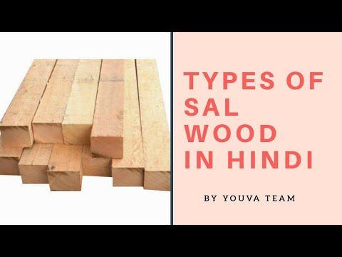 Types Of Sal Wood Desi Sal Malaysian Sal Kapur Sal