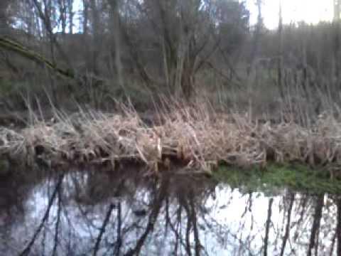 Walking Around the Castlemilk Park Pond in Glasgow, Scotland (January 2013)