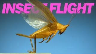 Insects in flight | 11 incredible species in SLOW MOTION