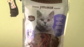 ♥♡★Покупки Petshop.ru для питомцев. Британская короткошерстная кошка. Заказ в интернет-магазине☆♡♥