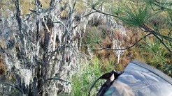 Central Florida wma public land deer hunting