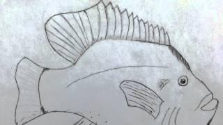Jack B - real fish movie external anatomy