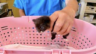 久々に子猫を病院に連れて行って検査してもらった結果。。