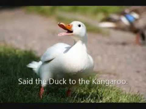Edward Lear's The Duck and the Kangaroo(music by P.J.Manilal)