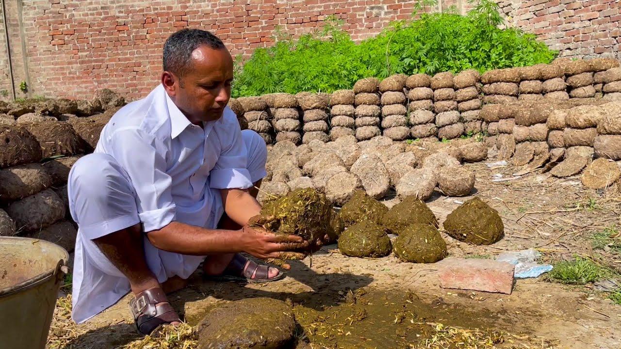 Village Life In Pakistan | Punjab Village Life | Rural Life Pakistan | Punjab Lifestyle | Mubashir