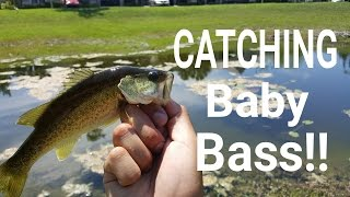 How to Catch Baby Bass the Easiest Way!