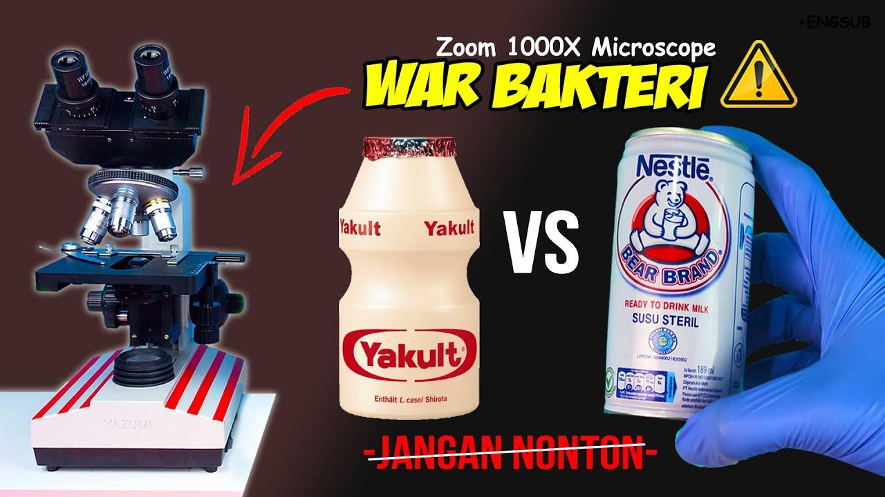 BAKTERI YAKULT vs SUSU BERUANG | Bear Brand Milk vs Yakult Microscope Zoom 1000X