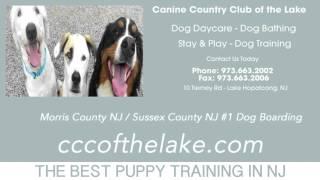 Puppy Training Parsippany Nj